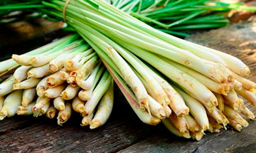 Lemongrass: What is It Anyway